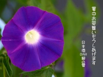Asagao_3